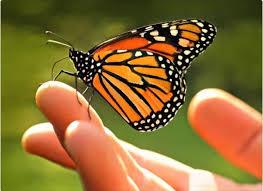 En monarca... soy feliz
