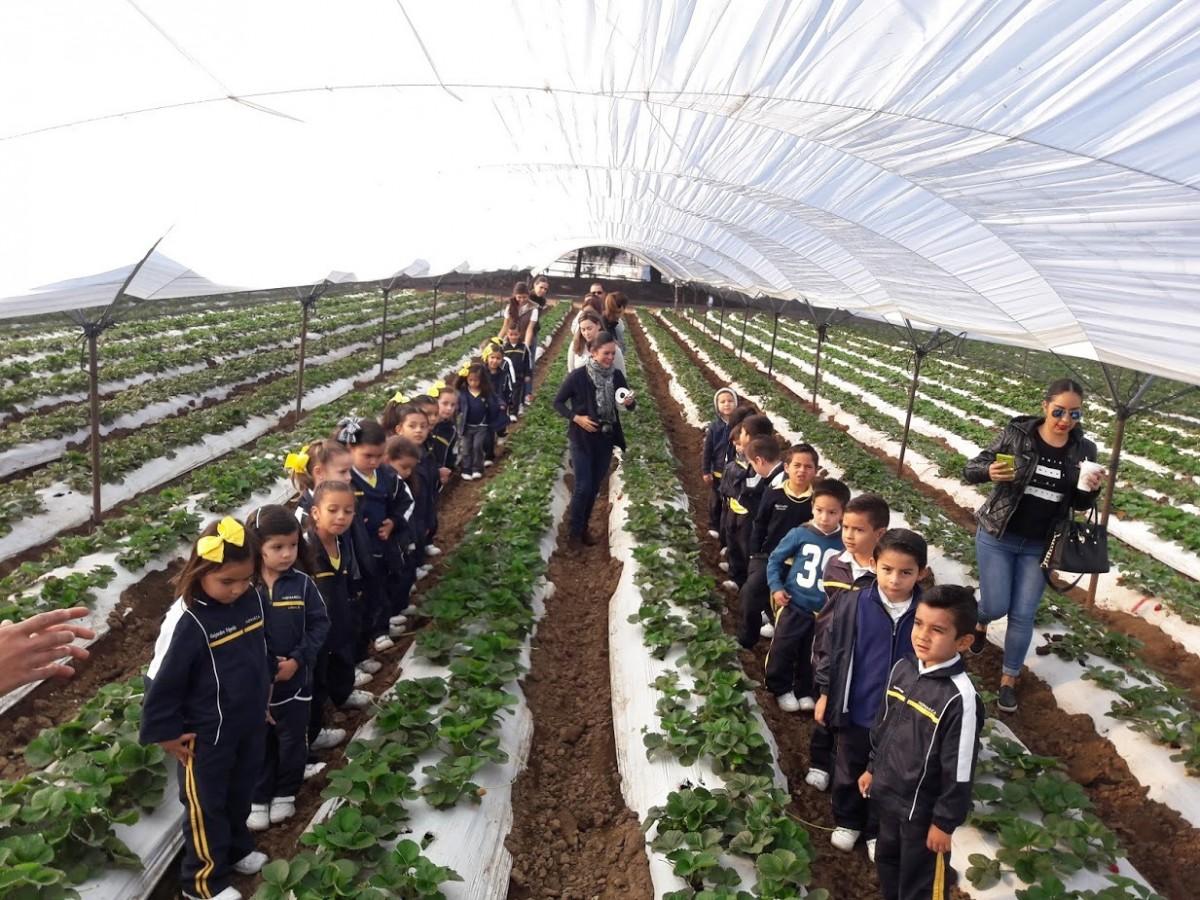 Visita al cultivo de fresas